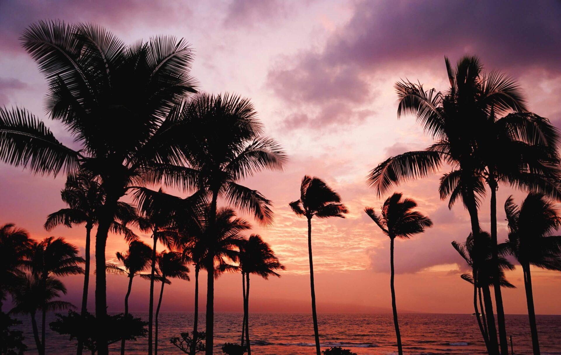 ハワイの夕焼けに映るヤシの木